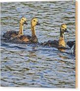 Saturday Swim Wood Print