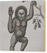Satyrus, Ourang Outang. Pongo Or Jocko Wood Print by Ken Welsh