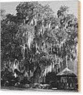 Savannah Wood Print