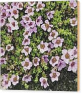 Saxifraga Oppositifolia Flowers Wood Print