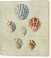 Scallop Shells Wood Print