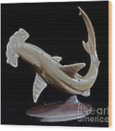 Scalloped Hammerhead Wood Print by Kjell Vistnes