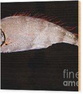 Scalloped Ribbonfish Wood Print