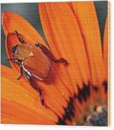 Scarab Beetle On A Guzmania Flower Wood Print