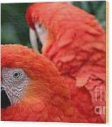 Scarlet Macaws Wood Print