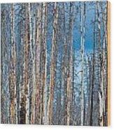 Scarred Pines Yellowstone Wood Print by Steve Gadomski