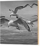 Sea Gull Scavengers Wood Print