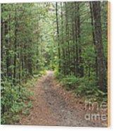 Scenic Walk Wood Print