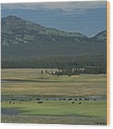 Scenic Wyoming Landscape With Grazing Wood Print