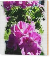 Scented Geraniums Wood Print