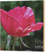 Scentimental Pink Wood Print