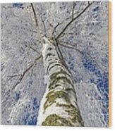 Snowworld Fineart  Wood Print
