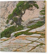 Schoodic Cliffs Wood Print