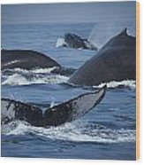 School Of Humpback Whales Wood Print