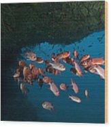 School Of Red Bigeye Under A Rocky Wood Print by Mathieu Meur