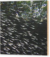 Schooling Fish Under Red Mangrove  Wood Print