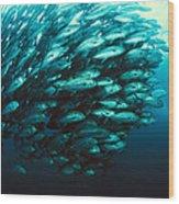 Schooling Jackfish Wood Print