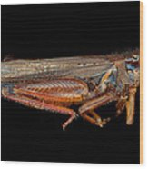 Science - Entomology - The Specimin Wood Print