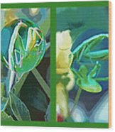 Science Class Diptych - Praying Mantis Wood Print by Steve Ohlsen
