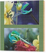 Science Class Diptych 2 - Praying Mantis Wood Print by Steve Ohlsen