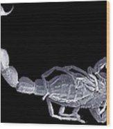 Scorpion, Sem Wood Print