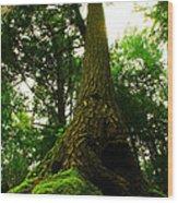 Screaming Tree Wood Print by Kamil Swiatek