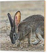 Scrub Hare Wood Print