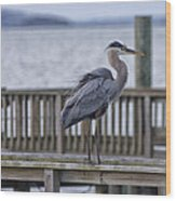 Scruffy Heron Wood Print