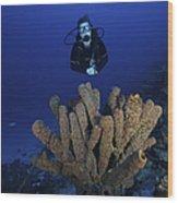 Scuba Diver Swims Underwater Amongst Wood Print