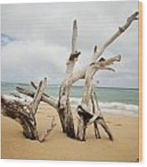 Sculptures By The Sea Wood Print