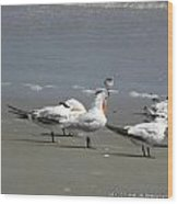 Sea Birds Obx Nc Wood Print