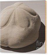 Sea Biscuit Clypeaster Rosaceus Wood Print