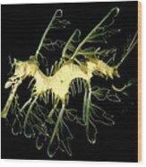 Sea Dragaon Wood Print