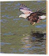 Sea Eagle's Water Landing Wood Print