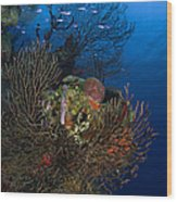 Sea Fan Seascape, Belize Wood Print