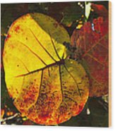 Sea Grape Leaves Wood Print