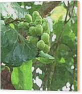 Sea Grape Sgwc Wood Print