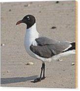 Sea Gull Posing For The Camera Wood Print