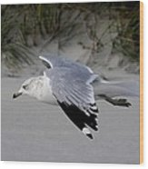 Sea Gull Searching Wood Print