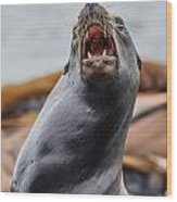 Sea Lion Agony Wood Print