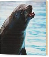 Sea-lion Wood Print