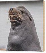Sea Lion Satisfaction Wood Print