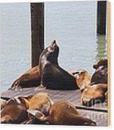 Sea Lions At Pier 39 San Francisco California . 7d14314 Wood Print