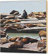 Sea Lions At Pier 39 San Francisco California . 7d14316 Wood Print