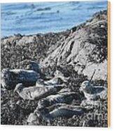 Sea Lions In Alaska Wood Print