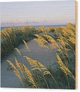 Sea Oats, Dunes, And Beach At Oregon Wood Print