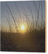 Sea Oats In The Sunset Wood Print