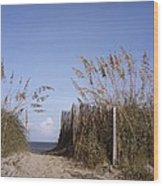 Sea Oats Line The Path Wood Print