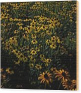 Sea Of Black-eyed Susans Wood Print