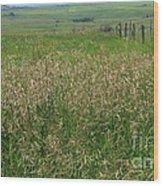 Sea Of Grass Wood Print